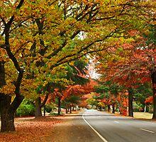 Delany Avenue - Bright by Darren Stones