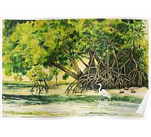 Mangrove Morning Poster