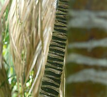 bamboo sticks - lord howe island collection by Maike