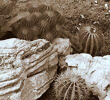 cactus 15 by Kittin