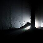 Fallen Tree by Philip Murray