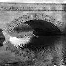 Ducks Under the Ross Bridge by Wendy Dyer