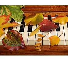 Autumn Leaves Tickle the Ivories Photographic Print