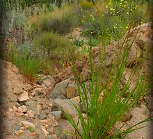 Dried up Stream Bed by Chris Popa