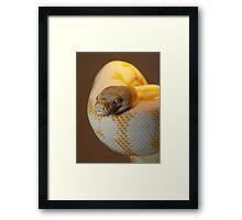 Albino Darwin Carpet Framed Print