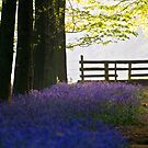 Morning Bluebells by Mark Thompson
