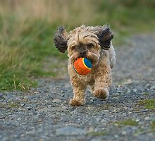 Fetch by David Friederich