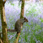 squirrel at wollaton park by AngelaFoster