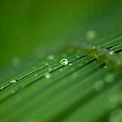 """SURVIVAL"" of a raindrop by Magaret Meintjes"