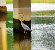 Heron Under The bridge by madman4