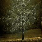 Bare Tree on a Springtime Sunset by Yuri Lev