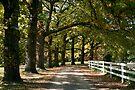 Autumn Oaks - Mylor by LeeoPhotography