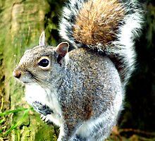 Squirrel by Artway