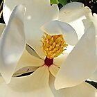 Shy Magnolia by Monnie Ryan