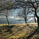 Misty shores of Llyn Dinas by Dafs