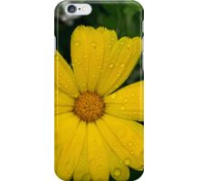 12254 Daisy iPhone Case/Skin