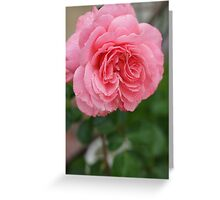 Hope for a new day!  Refreshed in pink!  Rose gets a drink in the dew! Hope in pink!   La Mirada, CA Greeting Card