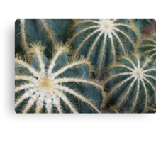 Sharp Beauty - Elegantly Ordered Cactus Needles Canvas Print