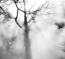 Steaming Tree by Armando Martinez