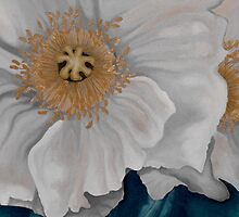 White Poppies by Kim Bender