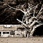 The shed and the dead tree by Lisa Wilson