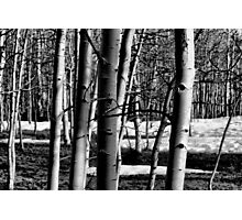 A Touch Of Winter Photographic Print