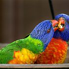 Rainbow Lorikeets by Darren Post
