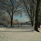 All Through the Seasons,  By Linda Jackson by Linda Jackson