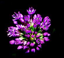 Floral Fireworks by buddykfa