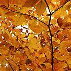 Yellow-Orange by elasita