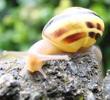 Snail Trail by Danielle LaBerge