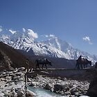 Himalaya Beauty by Louise Levy