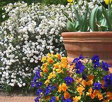 Flower Garden by DSHill