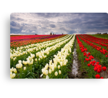 Storm over Tulips Canvas Print