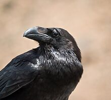 Raven by Andy Harris