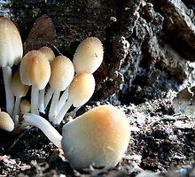 Little Mushroom Cluster by LynnMarie
