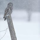 Watching over winter... by Daniel  Parent