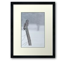 Watching over winter... Framed Print