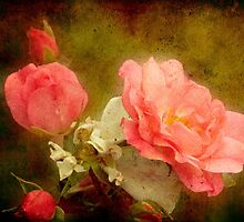 Roses (textured) by Jan Clarke