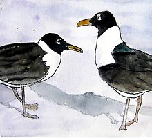 seagulls by derekmccrea