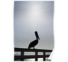 Pelican on the Pier Poster