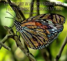 Ƹ̴Ӂ̴Ʒ BUTTERFLY WITH BIBLICAL SCRIPTURE Ƹ̴Ӂ̴Ʒ by ✿✿ Bonita ✿✿ ђєℓℓσ