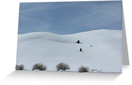 snow scene  near mono lake by noel aarons