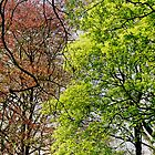 green and red in green park london by Mark Reed