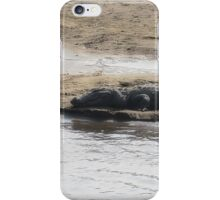 Crocodiles iPhone Case/Skin