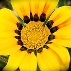yellow by Jan Stead JEMproductions