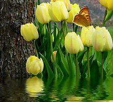 Spring Tulips by digitalmidge