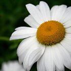 Daisy by NicoleRegine