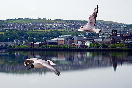 Gulls in Derry by Lunatic