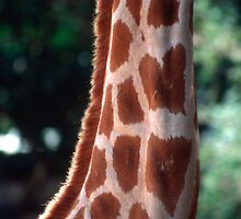 Geometric Giraffe Neck by Peter Clements